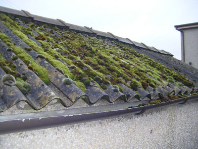 Asbestos cement roof